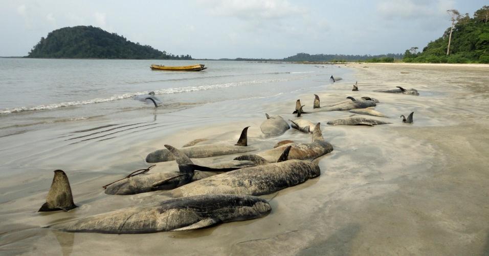 25.out.2012 - Mais de 40 baleias-piloto encalham e morrem na costa da baía de Bengala, na parte nordeste do Oceano Índico