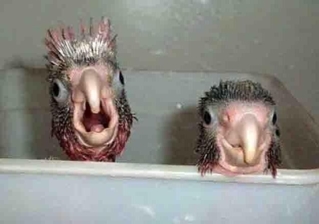 Atenção! Guardem a fórmula para o banho dos animais: feiura + hora do banho = fofura!