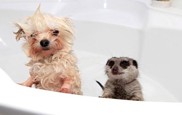 Ei!? Cadê a água? E o sabão!? Quem traz a toalha!??