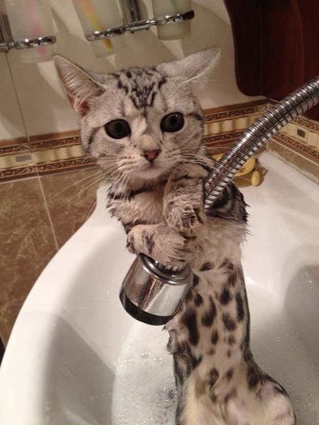 Escapando do banho??? Ou querendo puxar alguma coisa para brincar?
