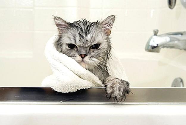 Miau! O dia é estressante, a vida é cheia de problemas... O gatinho parece continuar aborrecido com alguma coisa. Mas do banho que acabou te tomar, ah, disso ele não reclama