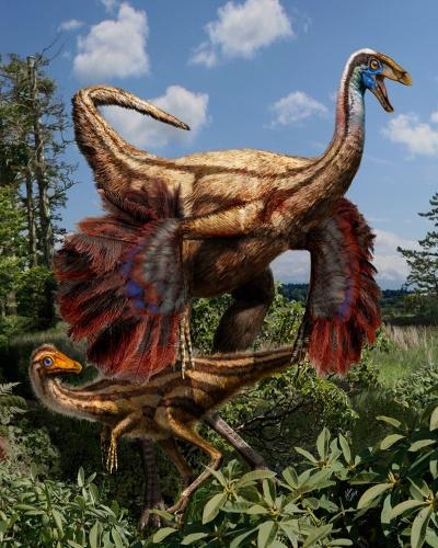 """26.out.2012 - A concepção artística retrata dinossauros ornitomimídeos cujos fósseis foram descobertos na província canadense de Alberta. Cientistas encontraram vestígios de plumas fossilizadas nos esqueletos de um jovem ornitomimídeo e de dois animais adultos. """"Estes dinossauros eram cobertos por uma espécie de penacho durante parte de sua vida e desenvolviam penas maiores debaixo das patas dianteiras para formar algo como asas mais adiante, na idade adulta"""", explicou Darla Zelenitsky, principal autora do estudo"""