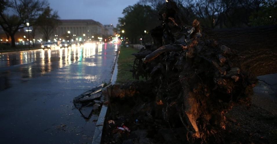 30.out.2012 - Árvore caída na rua 14, em Nova York, após a passagem do furacão Sandy pela cidade