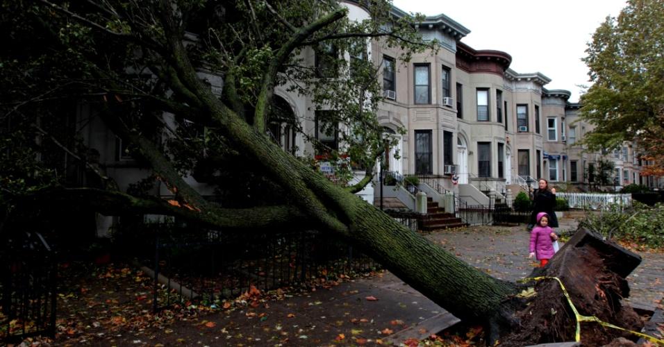 30.out.2012 - Pedestres observam árvore arrancada pela raiz no distrito do Brooklin, em Nova York. O número de mortos em decorrência do furacão Sandy já passa de 30 e deve aumentar, segundo autoridades, pois muitos mais estão desaparecidos. Os ventos fortes da tempestade já chegaram ao Canadá, onde uma mulher foi morta, em Toronto, atingida por destroços
