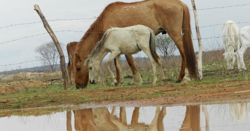 7.nov.2012 - Após longos períodos de seca, a cidade de Macaubas, interior da Bahia, recebe pouca chuva nesta manhã. Apesar de ser escassa, quando chove, a população é benefeciada já que, recentemente, houveram muitas queimadas na região