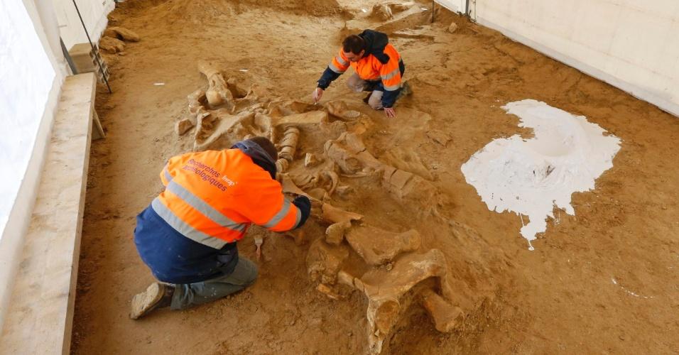 8.nov.2012 - Arqueólogos franceses trabalham na escavação da ossada de um mamute nos arredores de Paris, nesta quinta-feira (8). O espécime tem entre 125 mil e 200 mil anos, e seu esqueleto está cercado por ferramentas supostamente produzidas por homens pré-históricos, o que segundo os especialista é um sinal de interação entre as duas espécies