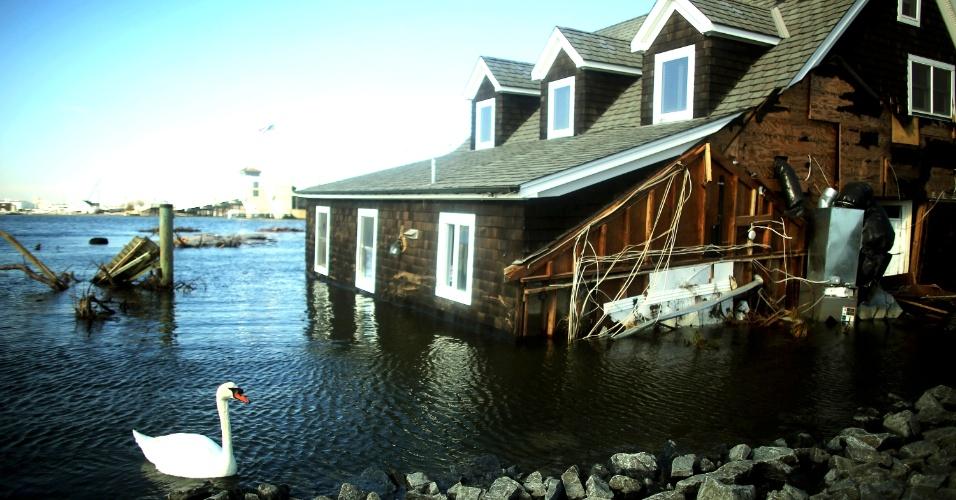 21.nov.2012 - Cisne nada em área residencial alagada pela tempestade Sandy, no Estado de Nova Jersey, nos Estados Unidos