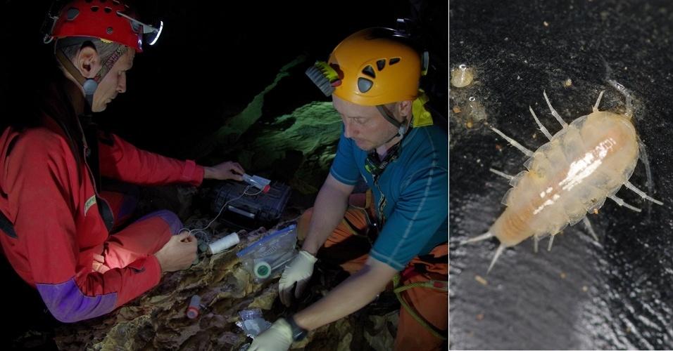 23.nov.2012 - Uma nova espécie de crustáceo foi descoberta em uma caverna da Sardenha, na Itália, durante o programa de treinamento da Agência Espacial Europeia (ESA, na sigla em inglês). Foi só no último dia que o grupo de astronautas achou exemplares com apenas oito milímetros da espécie 'Alpioniscus' nas águas do local. Esse animal integra os isópodes terrestres, conhecidos como bicho-de-conta ou tatuzinhos-de-jardim, o único grupo dos crustáceos que se adaptou totalmente para viver no solo - a surpresa, portanto, foi ver que ele voltou a viver na água, completando o ciclo evolucionário da espécie