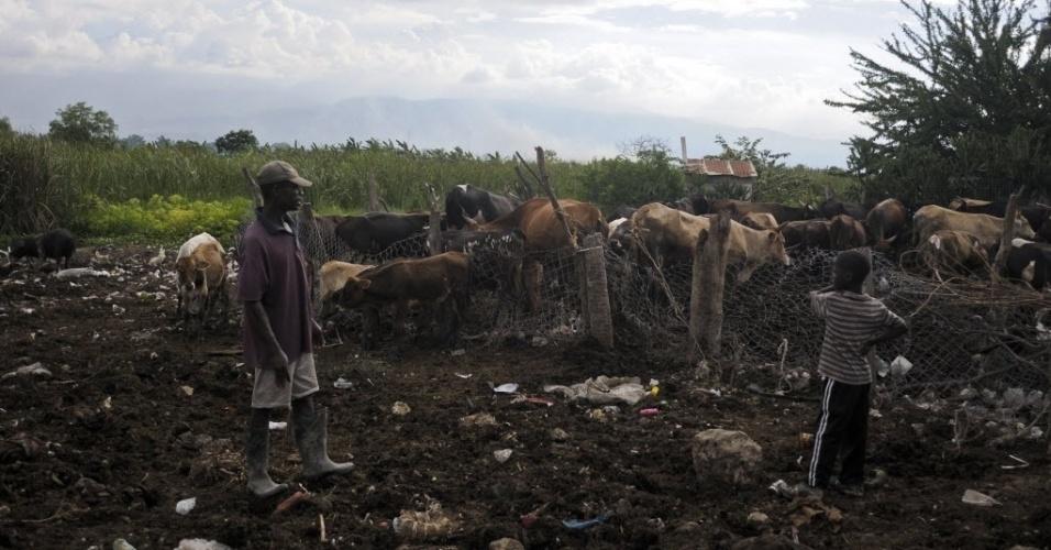 30.nov.2012 - Criador cuida de rebanho nos arredores de Porto Príncipe (Haiti)