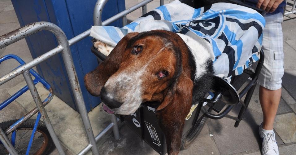 Mascote cachorro do Grêmio no largo dos Campeões entrada do estádio Olímpico (02/12/12)