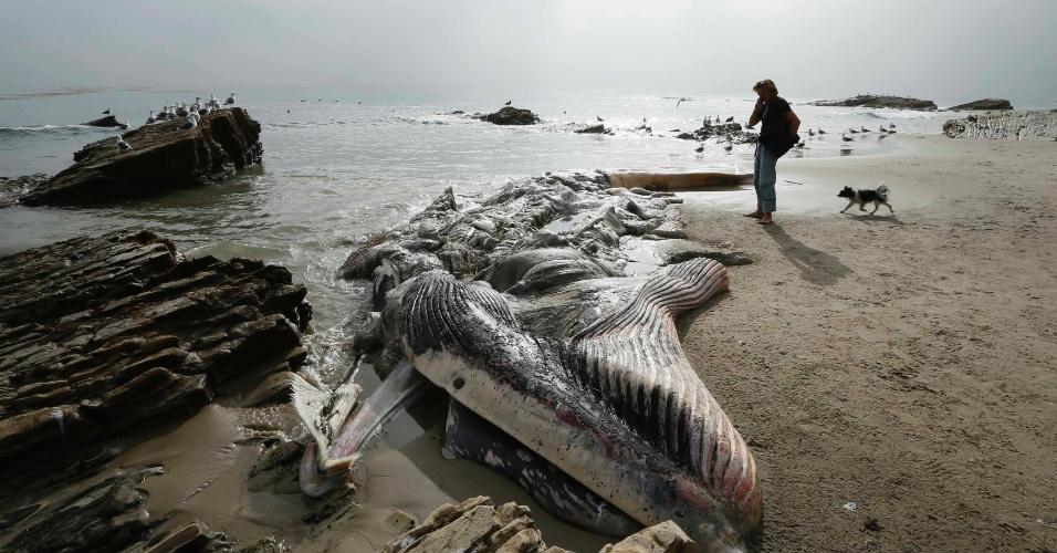 6.dez.2012 - Homem encontra carcaça de uma baleia de 20 toneladas e 12,5 m de comprimento na praia de Malibu, na Califórnia, nesta quinta-feira