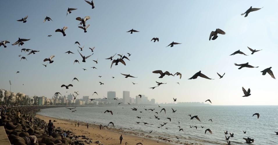 10.dez.2012 - Pássaros sobrevoam praia em Mumbai, na Índia