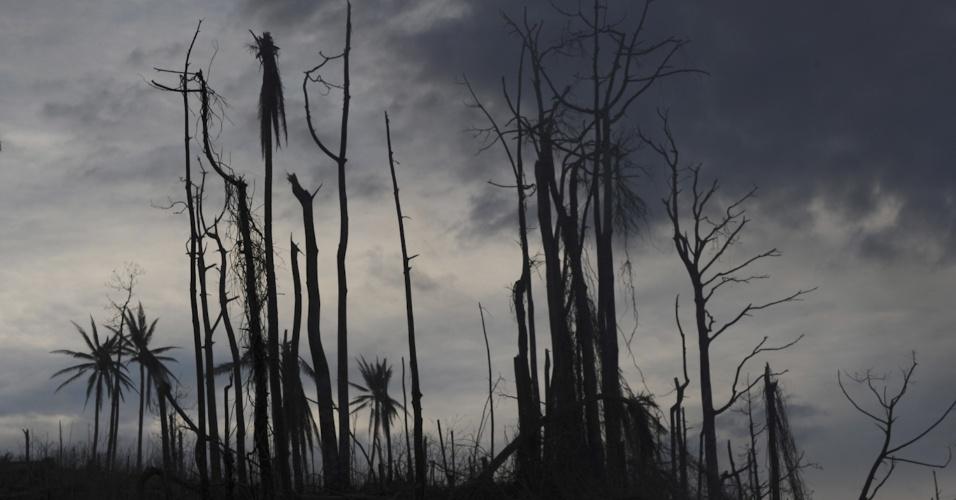 10.dez.2012 - A passagem do tufão Bopha destruiu parte da vegetação da província de Davao Oriental, nas Filipinas