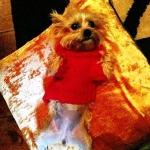 29.Nov.2012 - Lila, cachorrinha da cantora Miley Cyrus, morta no dia 11 de dezembro de 2012