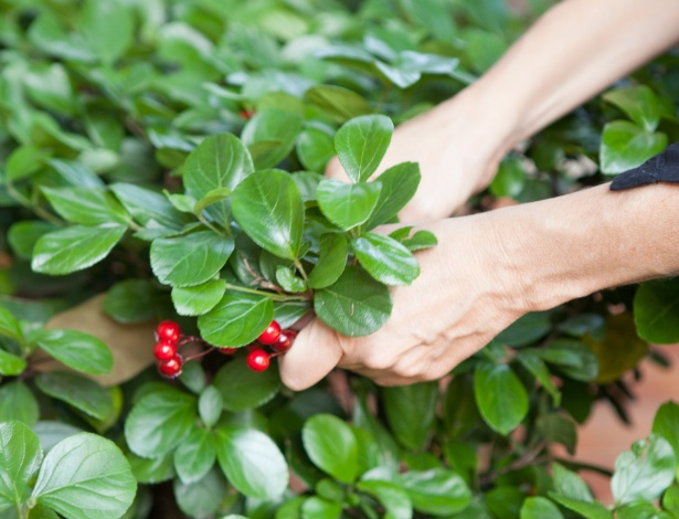 ?É bom ter uma graça natalina ou um enfeite qualquer que você tenha em casa. Também pode ser uma planta do seu jardim, por exemplo. Alecrim ou outra erva também servem. Vale o improviso!?