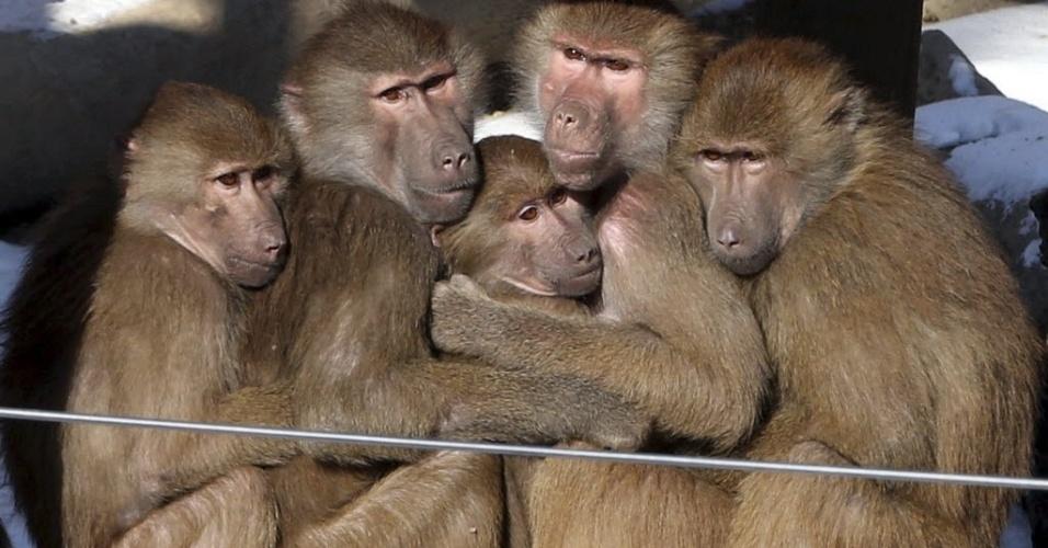 23.dez.2012 - Macacos se abraçam para espantar o frio, que chegou a -10ºC, em zoo de Seul