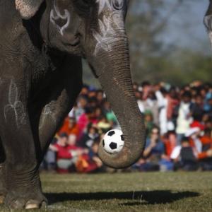 : Elefantes disputam partida de futebol em festival tradicional no Nepal
