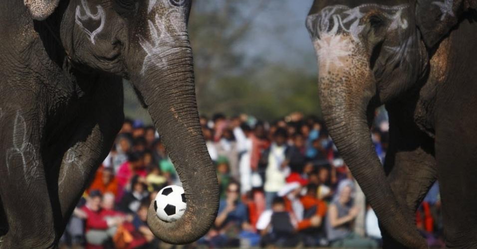 Elefante domina bola com sua tromba durante amistoso entre os animais no Nepal