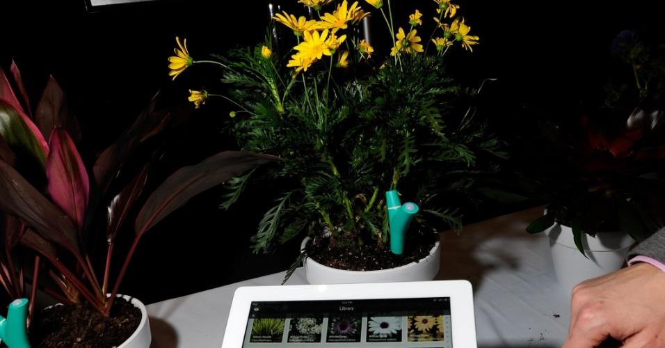 6.jan.2013 - Antes da abertura da feira, a empresa Parrot exibiu o acessório à direita, chamado Flower Power. O usuário deve associar o gadget a uma planta (fincando-o na terra), para que ele monitore as condições e envie alerta ao computador, caso a planta precise de algum cuidado especial. A novidade deve chegar ao mercado no final do ano, mas ainda não tem preço definido