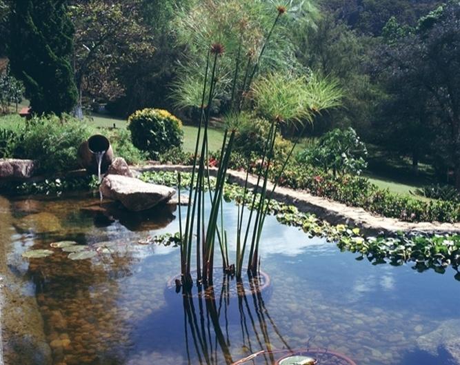 No projeto que busca reproduzir o capricho da natureza, Eduardo Luppi usou um vaso tombado para servir como bica. No centro do espelho d'água, um vaso com papiro, planta que cresce em terrenos úmidos e pantanosos