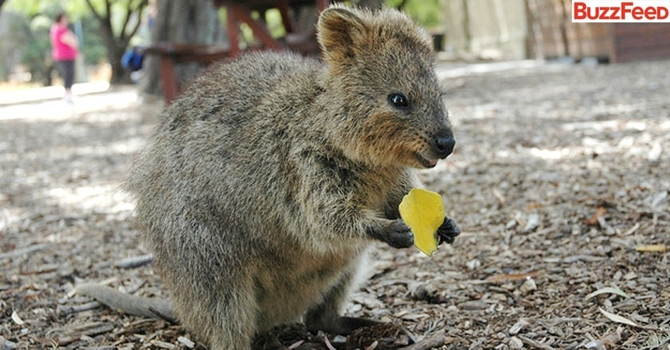 O Que Marsupial Para o site BuzzFeed  que