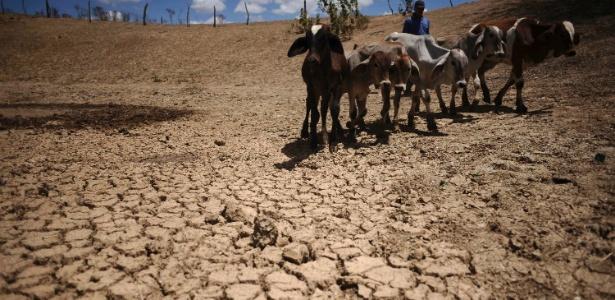Homem atravessa área afetada pela seca no Nordeste