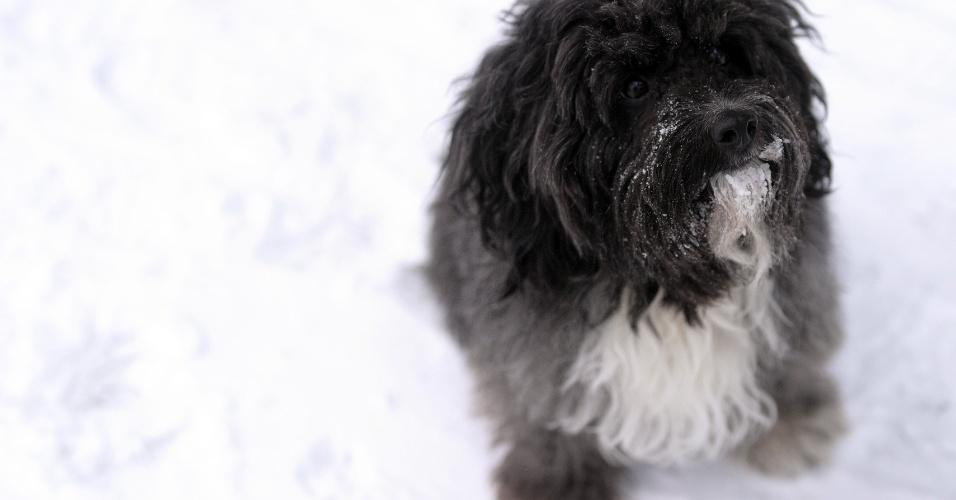 13.jan.2013 - Cachorrinho brinca na neve na cidade de Winterberg, no oeste da Alemanha