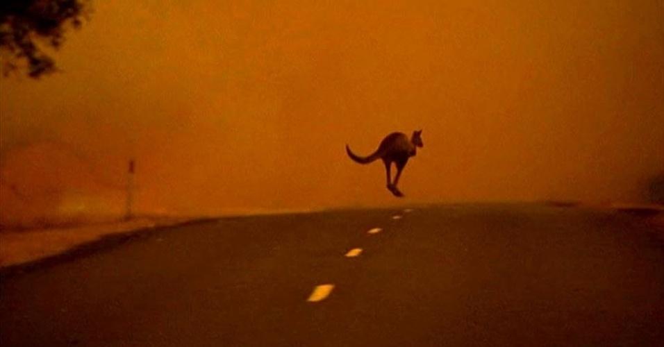 17.jan.2013 - Um canguru atravessa rodovia em  Victoria, na Austrália, em meio a incêndios florestais que atingem a região