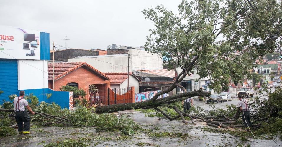 Forte chuva derruba árvore que cai em cima de carro, na Avenida Pedro Pinho em Osasco, na Grande São Paulo