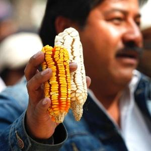 Fazendeiro mostra sabugos de milho durante protesto
