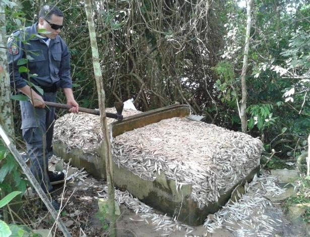 25.jan.2013 - Mais de cinco toneladas de peixes capturados irregularmente foram apreendidas nesta sexta-feira pela PMA (Polícia Militar Ambiental) em Iguape (a 200 km de São Paulo). O flagrante ocorreu no último dia de defeso --período de reprodução da espécie --, quando a pesca é proibida. Os pescadores fugiram quando avistaram as embarcações da polícia