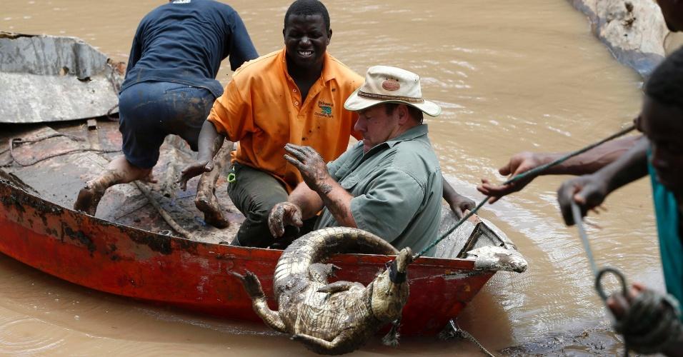 26.jan.2013 - Sul-africanos tentam recapturar cerca de 15 mil crocodilos que escaparam durante enchente em Mussina, na fronteira com o Zimbábue