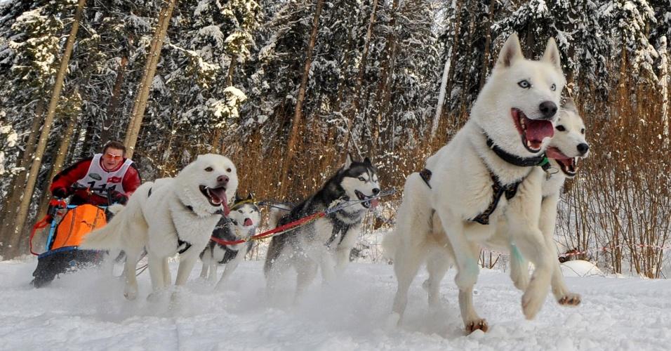 27.jan.2013 - Vila de Raubichi, em Belarus, sedia corrida de trenós puxados por cães, uma tradição no país