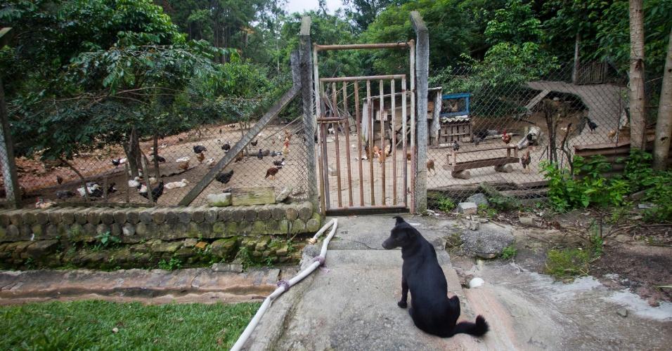 28.jan.2013 - O presídio conta com uma granja com chocadeiras e viveiro de pintinhos. As aves e seus ovos são comercializados na porta da prisão