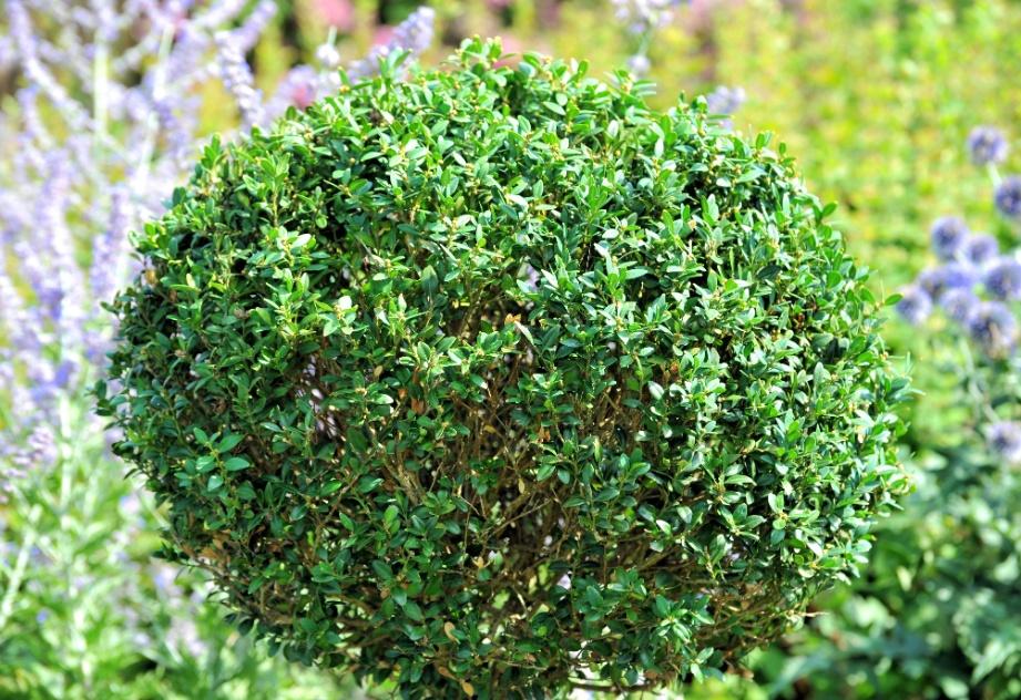 plantas de jardim que resistem ao solFlores e plantas que resistem