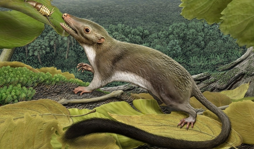 07.fev.2013 - Imagem mostra como seria o primeiro animal placentário que deu origem a todos os mamíferos atuais, que evoluiu logo após a extinção dos dinossauros