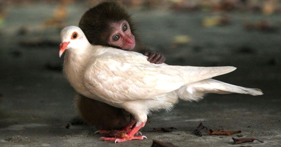 Resultado de imagem para imagens de carinho entre animais diferentes