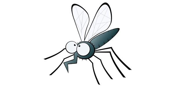 Pernilongos e mosquitos se reproduzem com maior facilidade nos meses de calor intenso