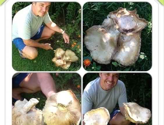20.fev.2013 Na manhã desta quarta-feira, o apresentador Gugu postou em seu Instagram uma foto onde ele aparece cortando um cogumelo.