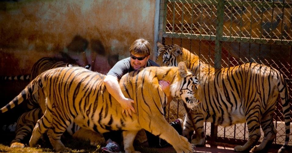 Tigres deverão ser castrados, diz Justiça