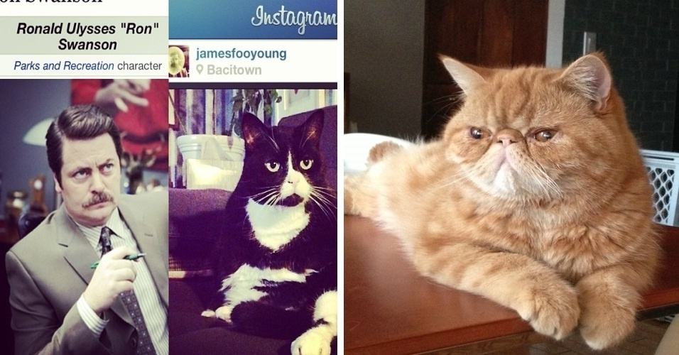 "O Tumblr ""Cats That Look Like Ron Swanson"" publica imagens de gatos que, segundo a página, se parecem com o personagem Ron Swanson, da série de comédia Parks and Recreation"