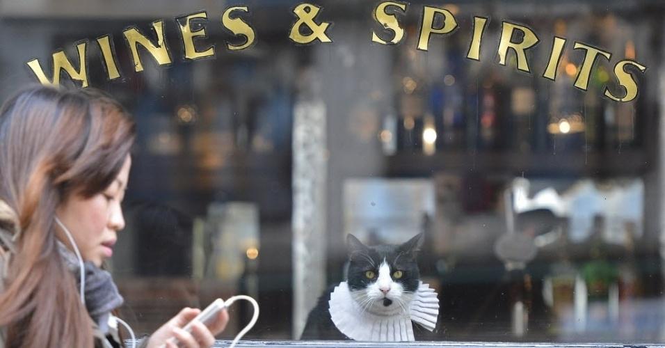 """27.fev.2013 - Da janela do pub onde mora em Londres, """"Ray Brown"""", gato residente do pub """"The Seven Stars"""" (Sete Estrelas, em inglês), observa movimentação na rua"""