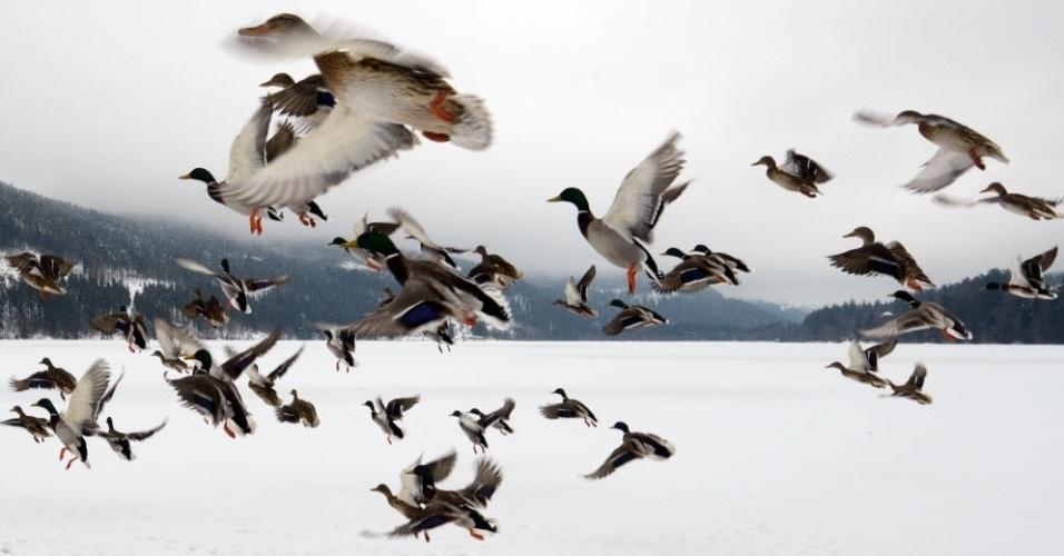 27.fev.2013 - Patos voam sobre lago congelado em Titisee-Neustadt, no sul da Alemanha, nesta quarta-feira (27)
