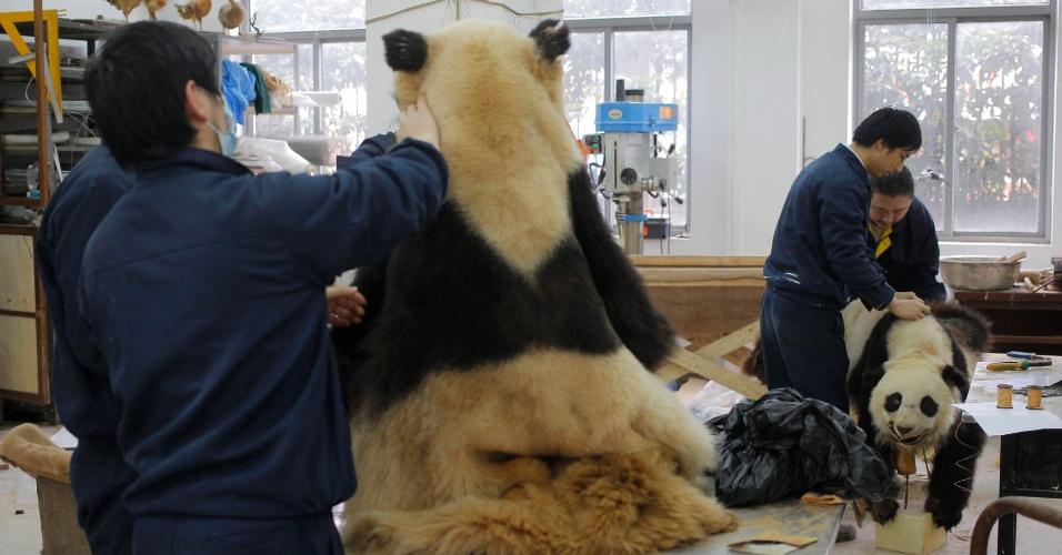 1.mar.2013 - Funcionários trabalham na produção de pandas para o Museu Natural de Xangai, na China - os animais são feitos de madeira e cobertos por pele. O grupo, que já fez 500 espécies de pandas desde 2007, leva cerca de três meses para finalizar um exemplar