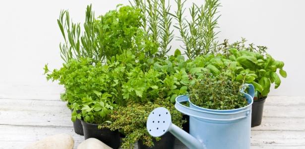 Posicione os vasinhos com as ervas aromáticas em locais que tenham incidência solar diária e direta
