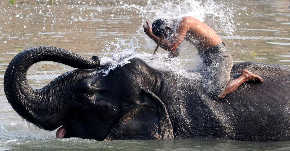 5.mar.2013 - Elefante usa a tromba para esguichar água em homem montado no animal, numa reserva ecológica ecológico da Índia