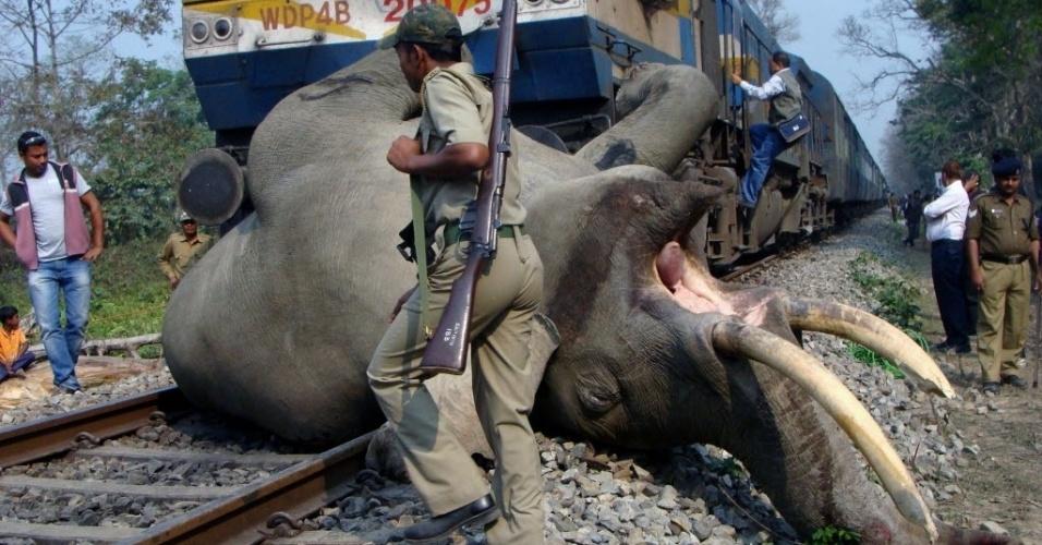 5.mar.2013 - Um elefante adulto foi morto atropelado por um trem em uma reserva florestal em Alipurduar, na Índia