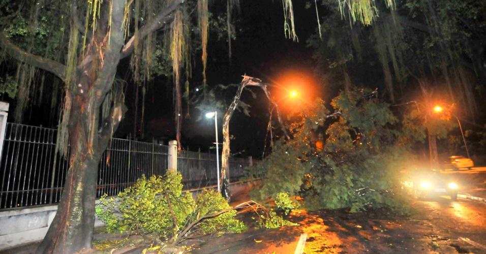 6.mar.2013 - A forte chuva da noite de terça (5) derrubou uma árvore na Quinta da Boa Vista em São Cristóvão, no Rio de Janeiro (RJ)