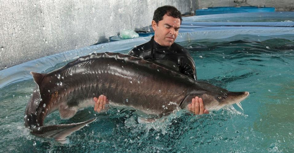 6.mar.2013 - Em imagem de 8 de fevereiro, biólogo de fazenda aquática de esturjões em Bascom, Flórida, move um peixe da espécie, uma fêmea de 180 kg, para desovar com machos. O peixe é o único a produzir o autêntico caviar, e leva até sete anos, em cativeiro, para passar a gerar a iguaria