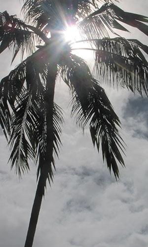 Coqueiros complementam a paisagem da praia Sonho Verde